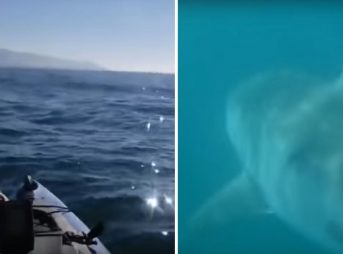kayak fishing, fly-by, giant great white shark, scares