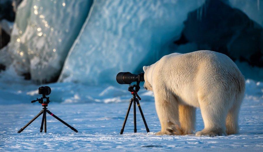 A polar bear checks out a camera. Photo: Reddit/u/Derawin