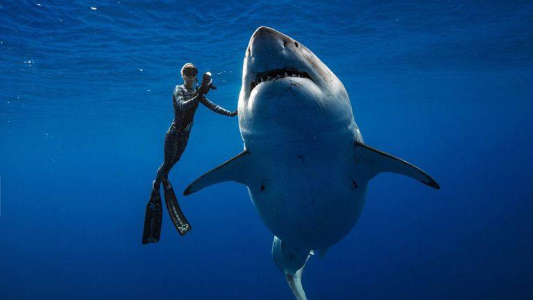 ocean ramsey, sharks, great white shark, deep blue, ocean ramsey, juan oliphant, hawaii, shark conservation, shark research,