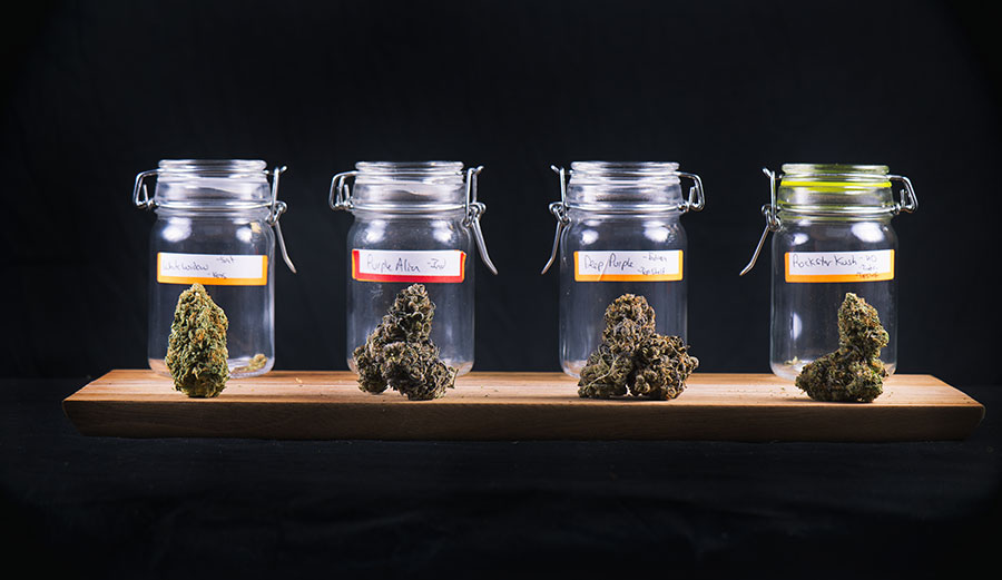 More Than Just THC: A Pharmacologist Looks at Marijuana's Untapped Healing Compounds