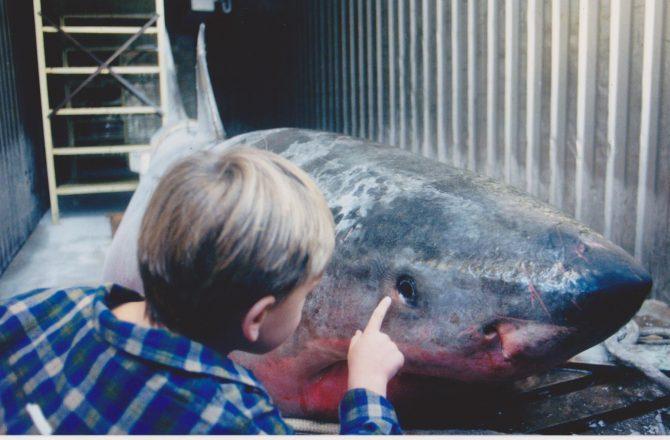 First shark encounter. Photo: Courtesy Pemberton