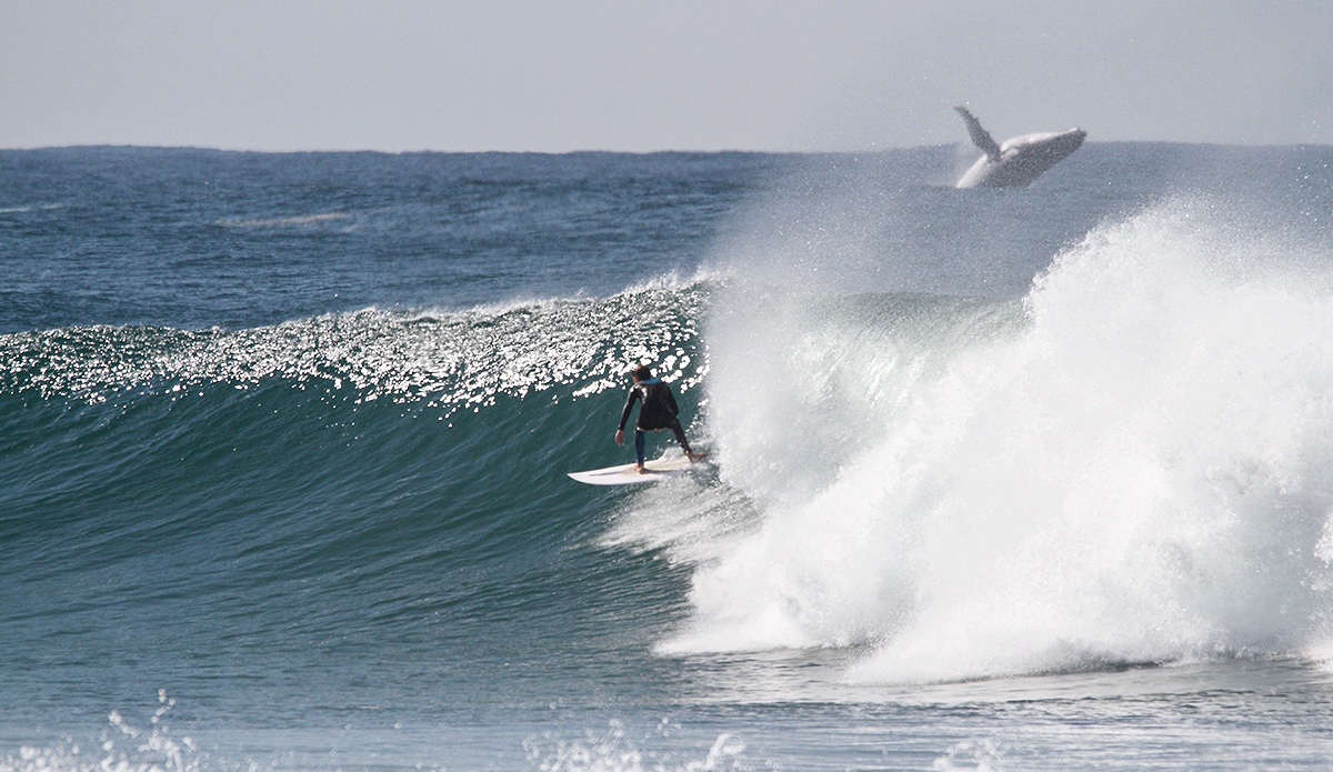 It Took 10 Years To Capture This Photo of a Blue Whale and One Lucky Surfer