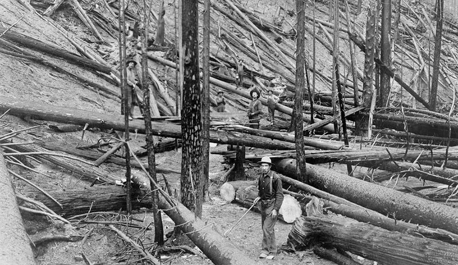 The Great Fire of 1910,