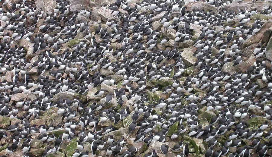 The Worst Marine Heatwave on Record Killed One Million Seabirds In North Pacific Ocean