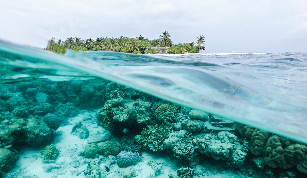 Scientists Predict 90% of Coral Reefs Will Disappear By 2100 - TheInertia.com
