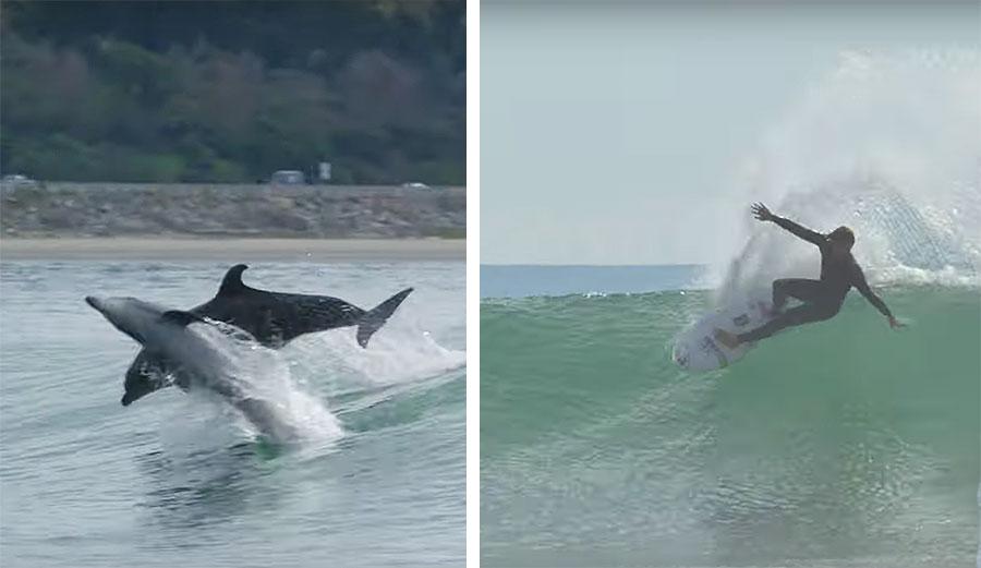 קונר קופין בסשן ביצועים לצד דולפינים ברינקון