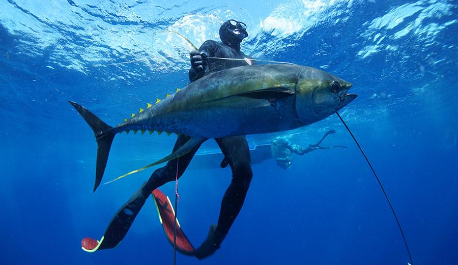 G.R. Tarr spearfishing