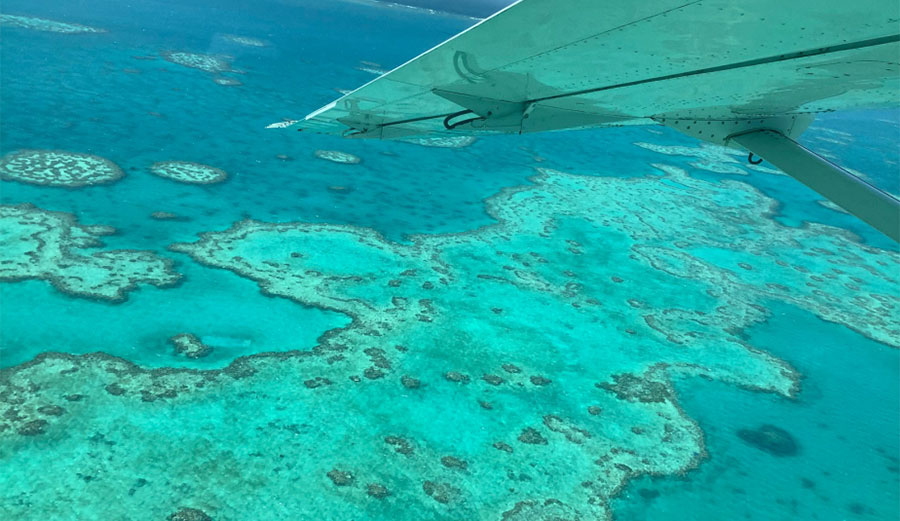 Things are not looking good for the Great Barrier Reef.