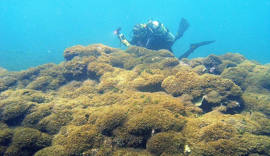 Algae in Hawaii