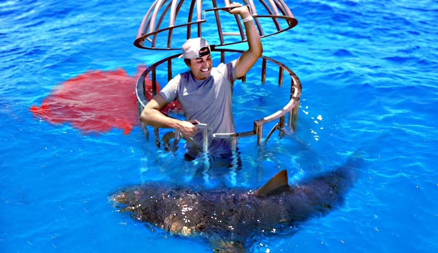 This Guy Tested Whether Sharks Preferred Human Blood or Fish Blood - TheInertia.com