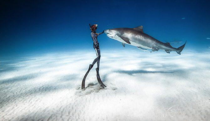 Ocean Ramsey Shark Deter Juan Sharks