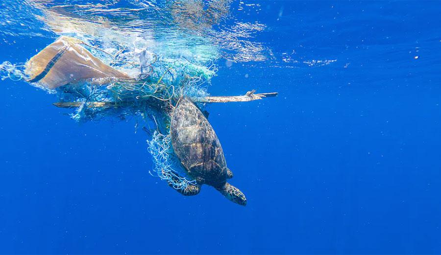Turtle in ocean garbage