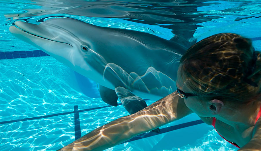 animatronic dolphin swimming