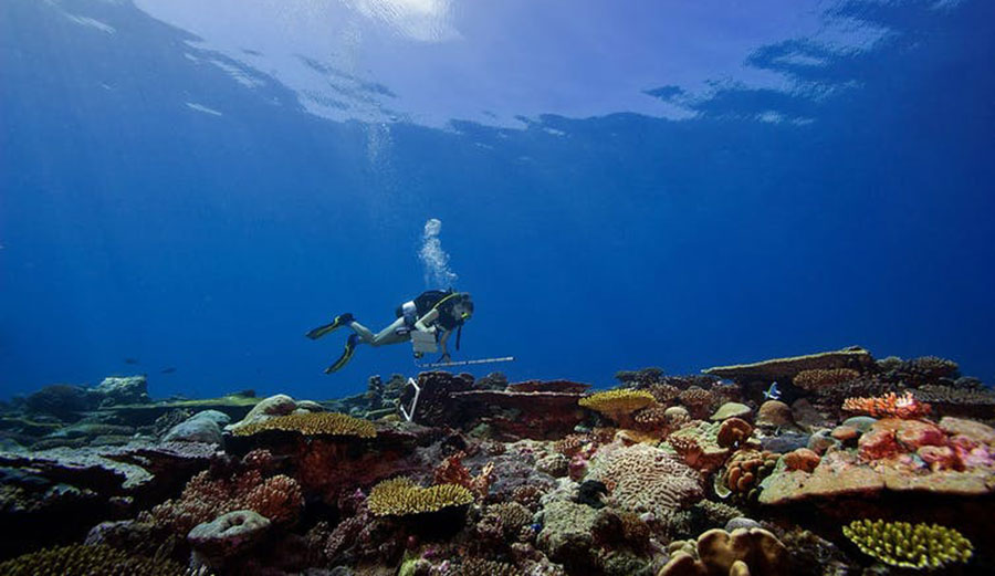 A diver documents the coral reefs in the Chagos Archipelago.