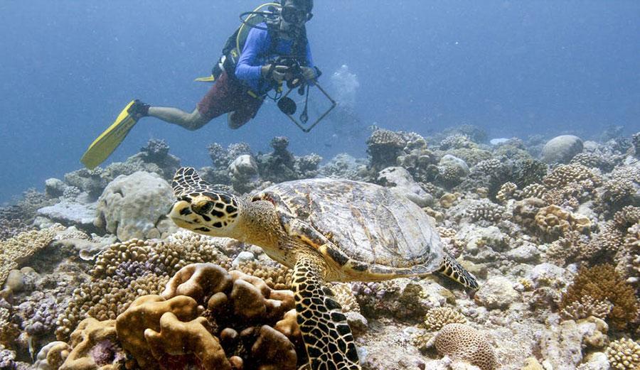 Sam Purkis, dives near a hawksbill turtle in the Chagos Archipelago
