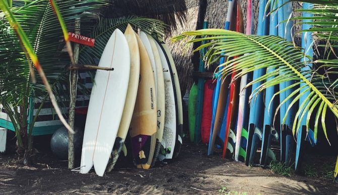 surfboards in the rainforest costa rica